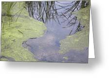 Marsh Abstract Greeting Card