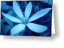 Marsh Grass Flower In Blue Greeting Card