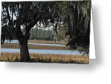 Marsh Oak Greeting Card