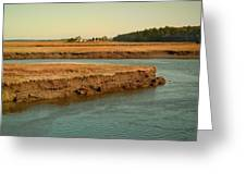 Marsh Of Pine Point Greeting Card