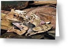 Marsupial Frog Gastrotheca Ovifera Greeting Card