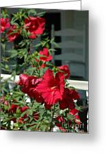 Martha's Vineyard Red Hibiscus And Porch Greeting Card