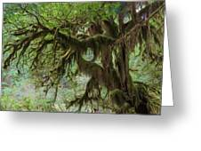 Marvelous Moss Greeting Card