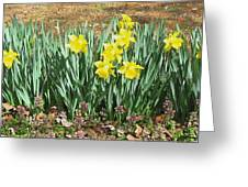 Mary's Daffodils Greeting Card