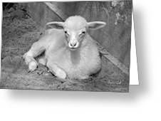 Marys Little Lamb... Or Kid In Black And White Greeting Card