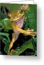 Masked Treefrog Greeting Card