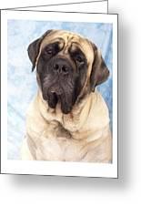 Mastiff 369 Greeting Card