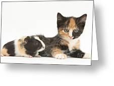 Matching Kitten & Guinea Pig Greeting Card