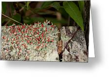 Matchstick Lichen Greeting Card