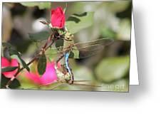 Mating Dragonfly Greeting Card