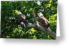 Mating Pair Greeting Card