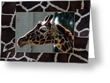 Matted Giraffe Greeting Card