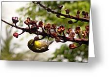 Maui Bird Greeting Card