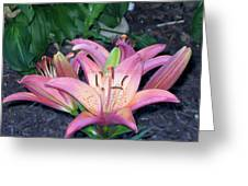 May Birth Flower Greeting Card