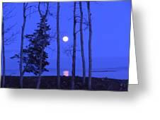May Moon Through Birches Greeting Card