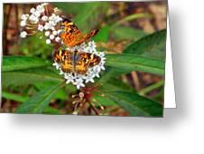 May Wildflower Visitors  Greeting Card