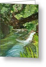 Maya Ubud Tree Bali Indonesia Greeting Card
