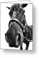 Me So Horsey Greeting Card