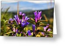 Meadow And Mountains Greeting Card