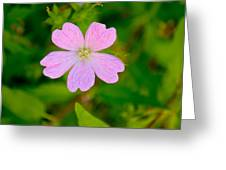 Meadow Checker Mallow Greeting Card