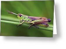 Meadow Grasshopper Greeting Card