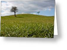 Meadow Greeting Card by Semmick Photo