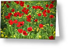 Meadow With Tulips Greeting Card