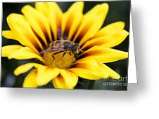 Meant To Bee Greeting Card