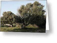Mediterranean Wood Wiew Greeting Card