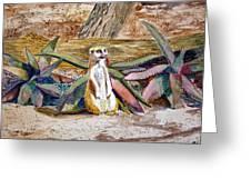 Meerkat And Aloe Greeting Card
