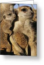 Meerkat Pups With Their Caretaker Greeting Card