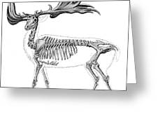 Megaloceros, Cenozoic Mammal Greeting Card