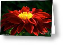 Melody Mambo Dahlia Greeting Card
