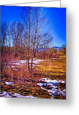 Melting Snow In South Platte Park Greeting Card
