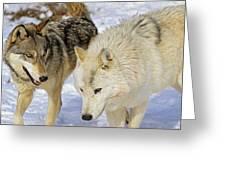 Members Of Wolf Pack Greeting Card