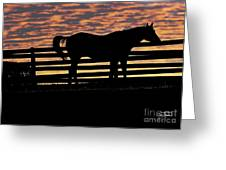 Memorial Day Weekend Sunset In Georgia - Horse - Artist Cris Hayes Greeting Card