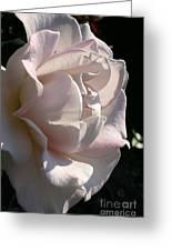 Memorial Rose Greeting Card