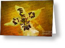 Memories Of An  Orchid Greeting Card