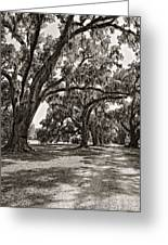 Memory Lane Monochrome Greeting Card by Steve Harrington