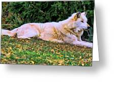 Menominie Park Grey Wolf Greeting Card