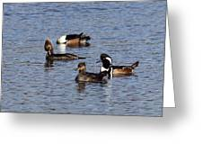 Mergansers After The Rain Greeting Card