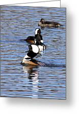 Mergansers All In A Row Greeting Card