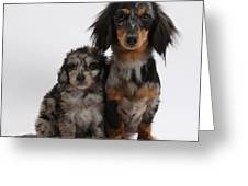 Merle Dachshund And Doxie Doddle Pup Greeting Card