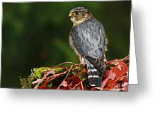 Merlin In The Rain Greeting Card