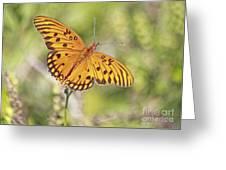 Merritt Butterfly Greeting Card