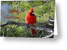 Merry Christmas Cardinal Greeting Card