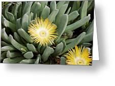 Mesemb (conicosia Elongata) Greeting Card