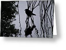 Messy Pond Reflection  Greeting Card