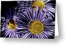 Metallic Daisies Greeting Card