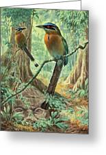 Mexican Motmots Are Perched On Jungle Greeting Card by Walter A. Weber